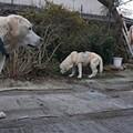 Photos: くん子さん