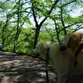 Photos: モデル犬