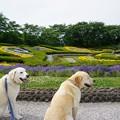 Photos: 花わんこ