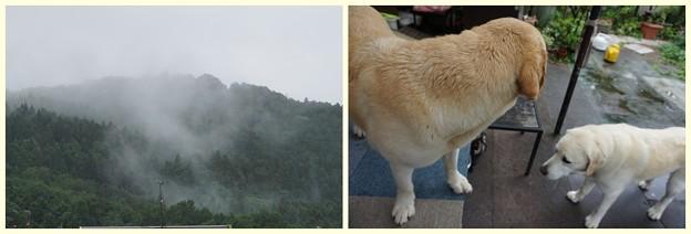 Photos: 朝は雨