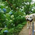 Photos: 花のお山