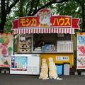 Photos: みちのく公園