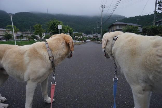 道の真ん中