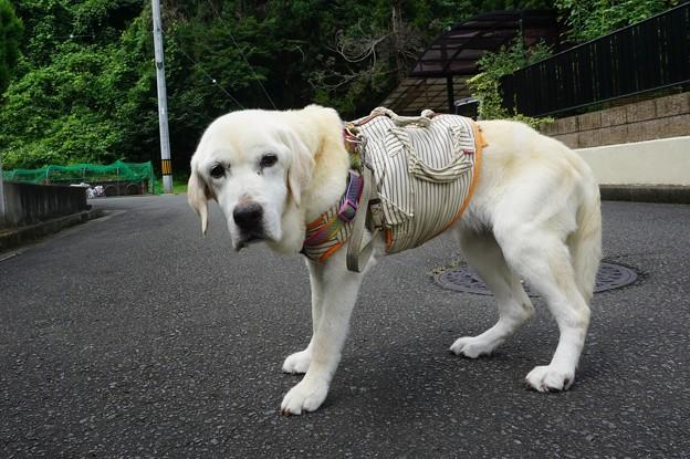 くん子の散歩