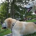 Photos: 愛犬といっしょの躾け方教室