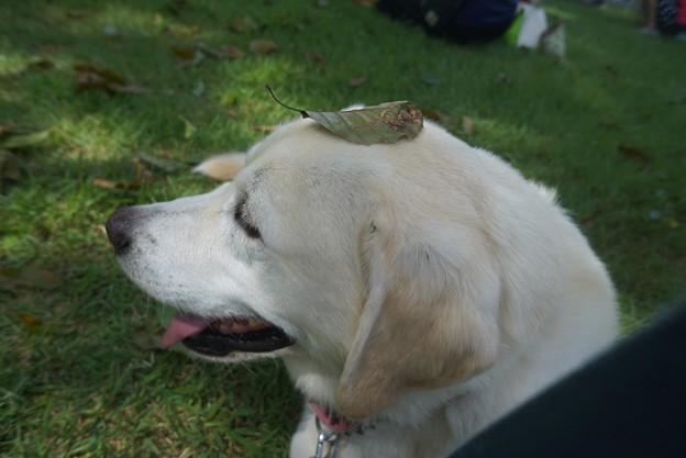 愛犬といっしょの躾け方教室