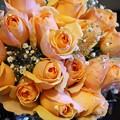 Photos: rose1701