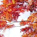 写真: 紅葉の空