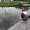 Photos: キングフィッシャー鉄板王戦前日