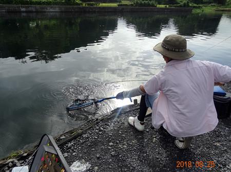 """2018 キングフィッシャー☆夏の大感謝祭☆ """"お祭り男決定戦"""""""