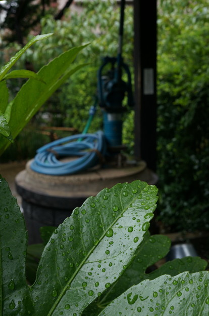 雨が降ってた日