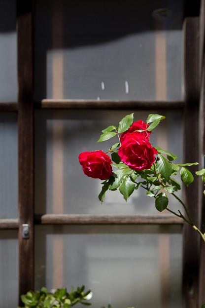 窓辺に咲く
