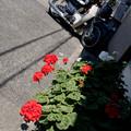 写真: 花とカブと