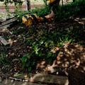 Photos: 木の下に眠る