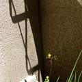 Photos: 花と影