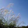 Photos: 秋の風