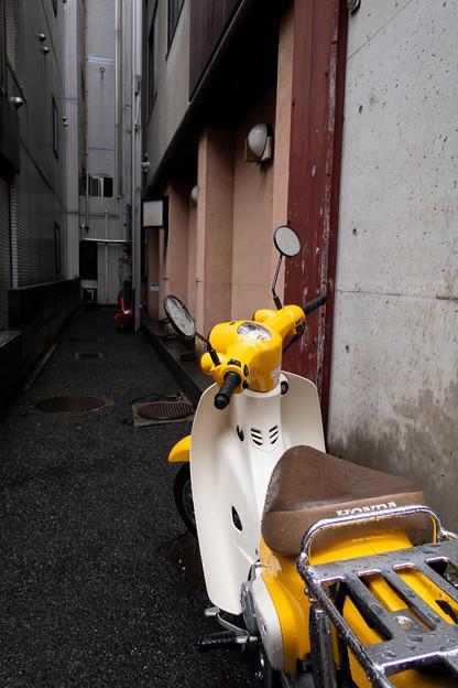 黄色いカブ