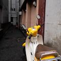 Photos: 黄色いカブ