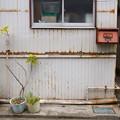 Photos: ポストと鉢植え
