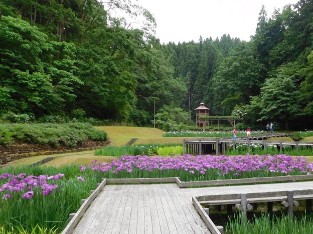20180616(しらさぎ森林公園5)