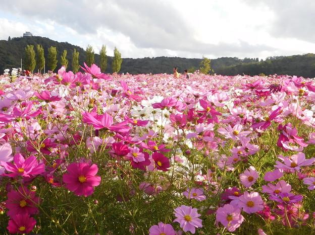 20181014(長岡丘陵公園10)