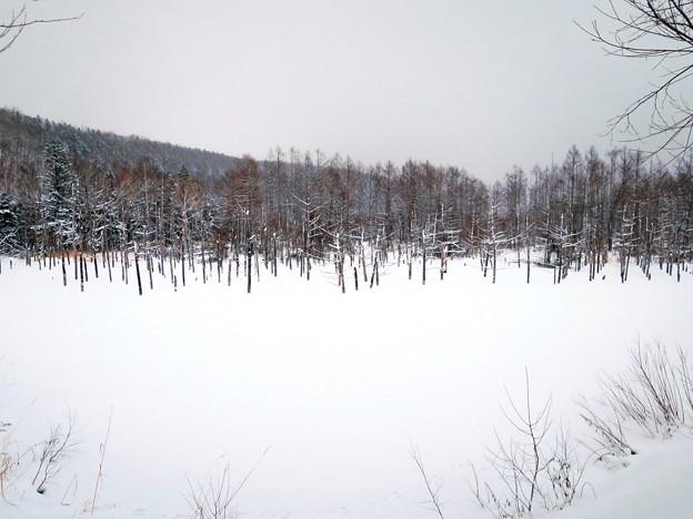 写真: 青い池・・・
