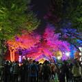 Photos: LED変化紅葉