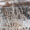 写真: 二級河川 川辺の霧氷