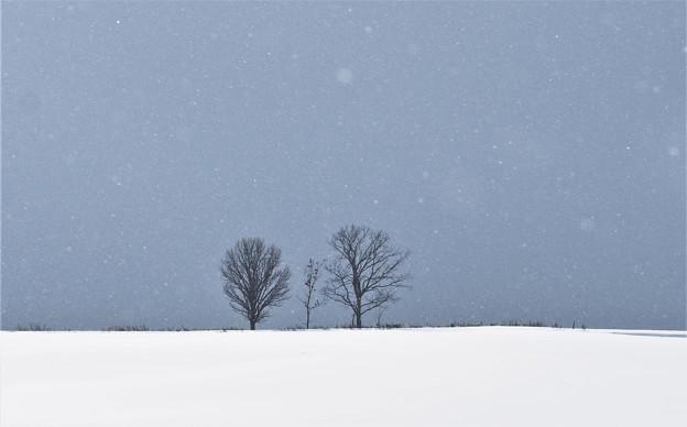 Photos: 親子仲良く…親子の木