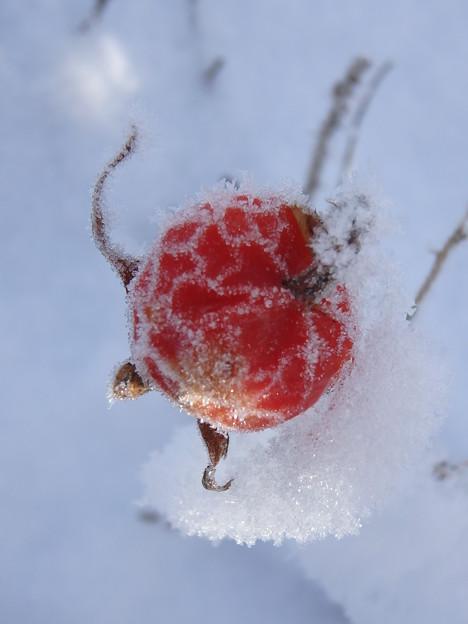 氷結のハマナスの実