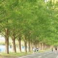 写真: トクさんぽ16 メタセコイア並木
