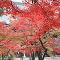 Photos: 京都の紅葉めぐり-5