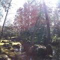 春の北畠神社