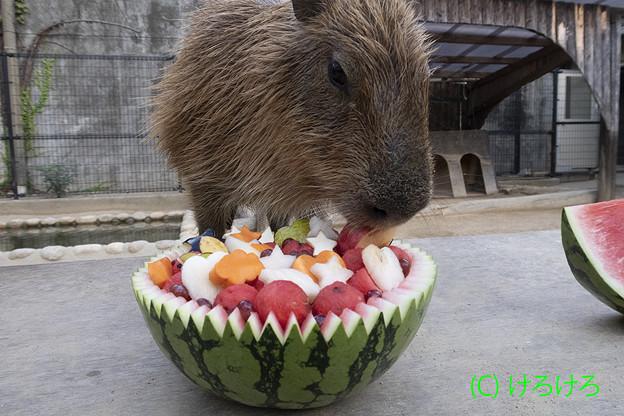 リンゴからいただきますー。(めんま)