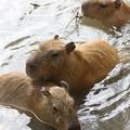 Photos: 水遊び。