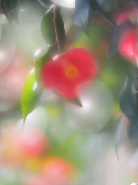Photos: 優春
