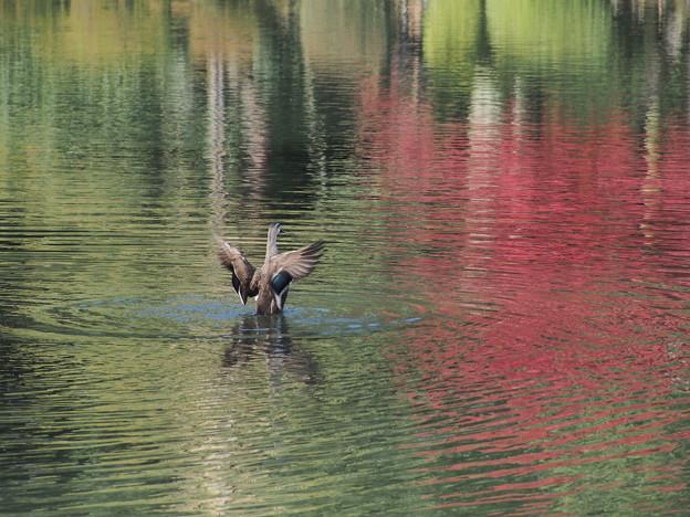 秋色の霞ケ池