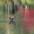 Photos: 秋色の霞ケ池
