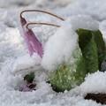 Photos: 再びの雪