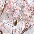 Photos: 春謳歌