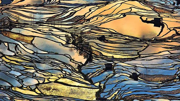 写真: 水稻田之美