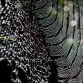 糸模様-2