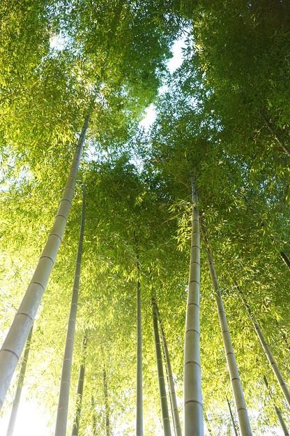写真: 竹林
