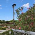夏の日の公園