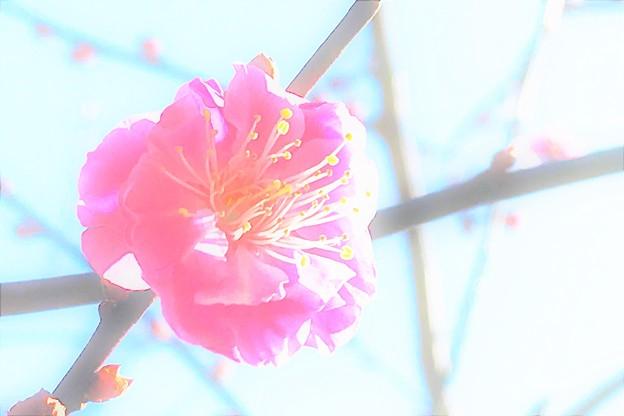 写真: IMG_6833