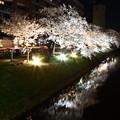 Photos: 夜桜 IMG_3604