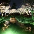 Photos: 兼六園のライトアップ IMG_3921