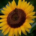 Photos: DSC_3644