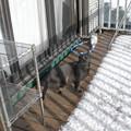 Photos: 雪とがっちゃん3
