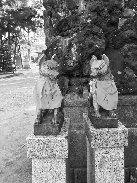 笠間稲荷神社 奉納狐その1